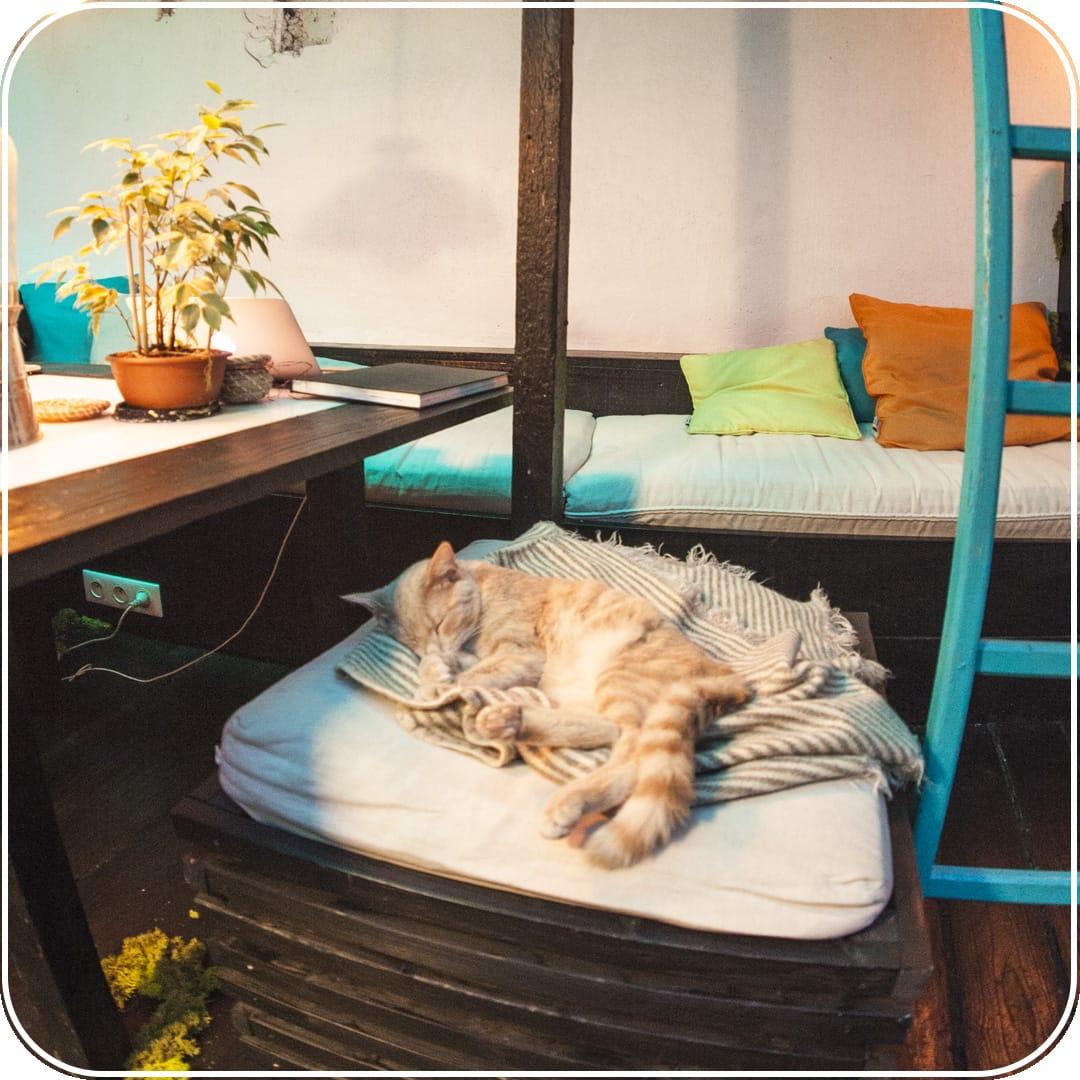 MEISO-Relaxation-Paris-insolite-Oasis-chat-sommeil-ronron-therapie-flottaison-isolation-sensorielle-bulle