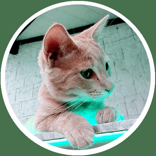 chat-architecte-designer-meiso